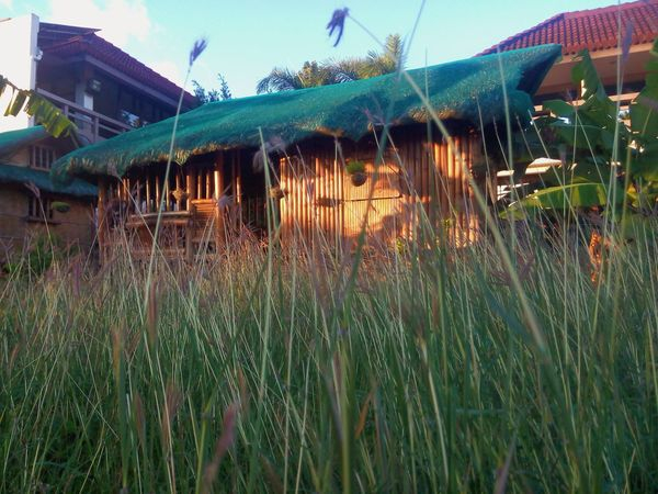 Outdoors Close-up Nature Day Grass Nipahut Nipa Hut Grasses In The Wind Grass Photography Grass