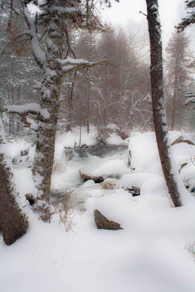 Beauty In Nature Snowy Forest Snow River Tree
