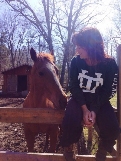 Fence Barn Country Living Horse Chestnut Quarter Horse Domestic Animals Mare Peaceful