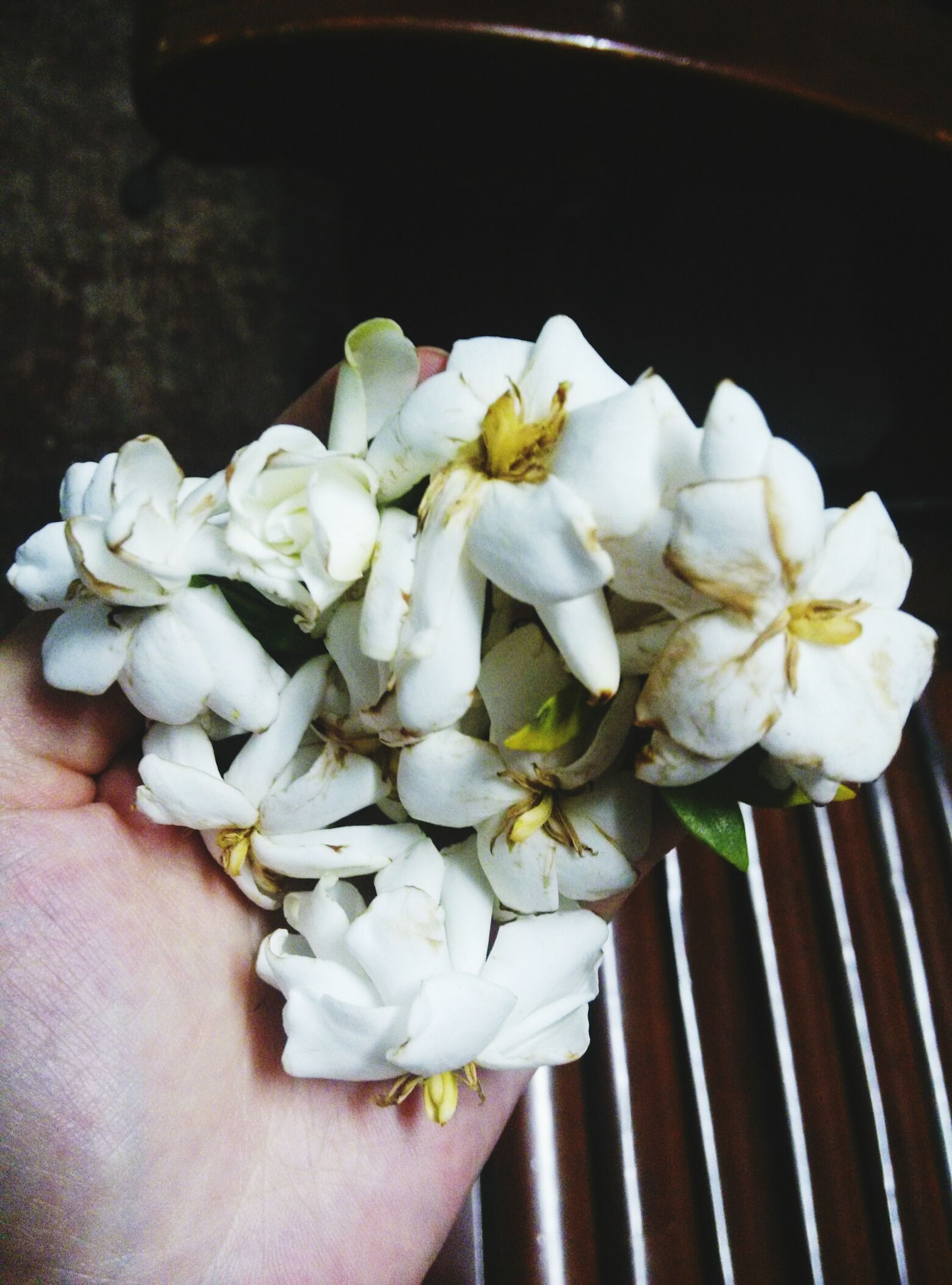 flower, person, freshness, petal, fragility, holding, white color, flower head, part of, personal perspective, cropped, unrecognizable person, close-up, beauty in nature, blossom, human finger, high angle view