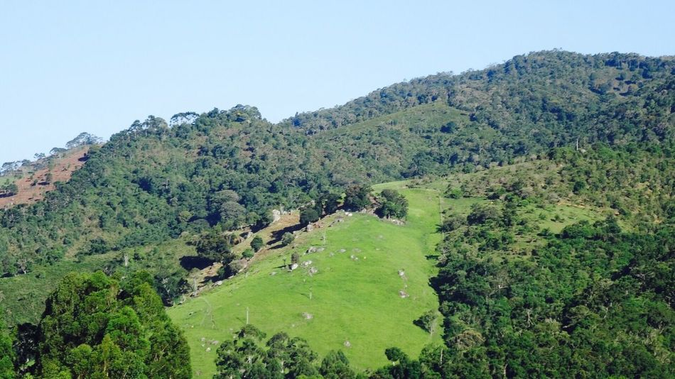 Pico Macela Cunha SP Nature Landscape Beauty In Nature Outdoors Forest