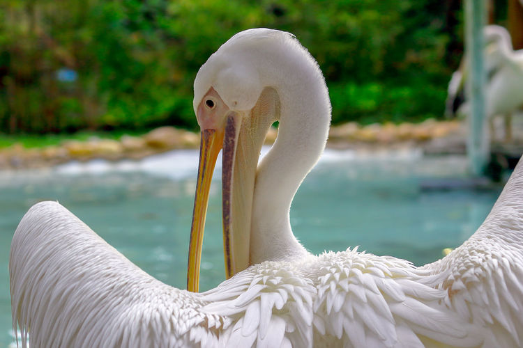 Close-Up Of Pelican By Water
