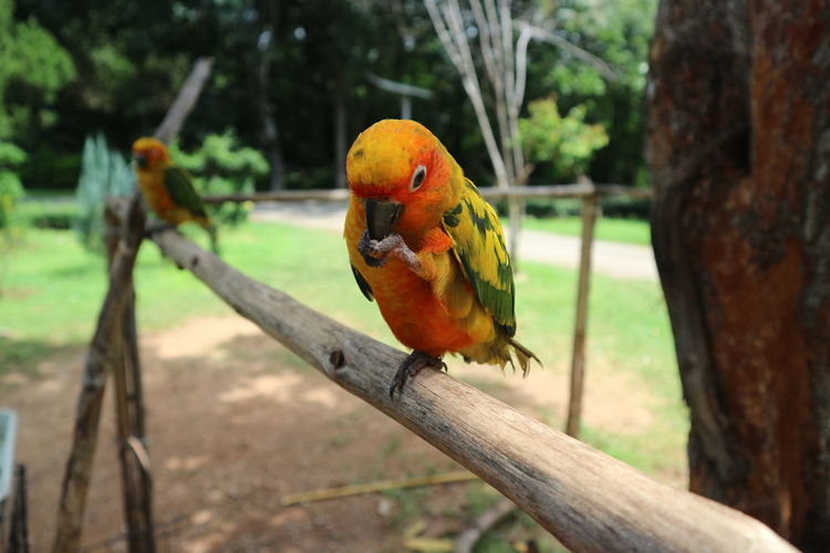 Animal Themes Animal Wildlife Animals In The Wild Beauty In Nature Bird Branch Close-up Day Focus On Foreground Gold And Blue Macaw Macaw Nature No People One Animal Outdoors Parrot Perching Scarlet Macaw Tree Tree Trunk