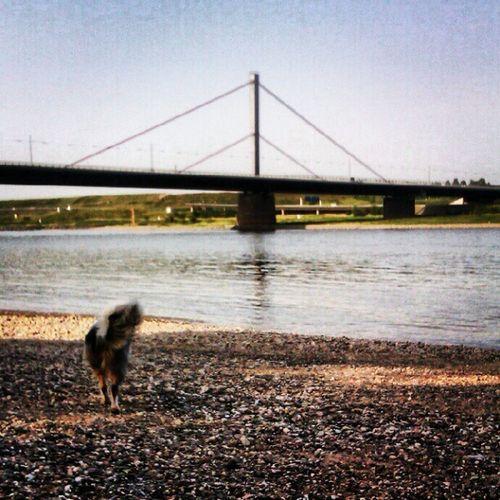 Beach time again with Aidan, the crazy dog #koeln #köln #cologne #rheinaue #merkenich Cologne Köln Rheinaue Koeln Merkenich