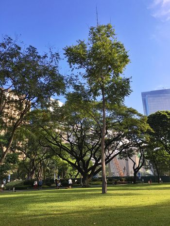 A Saturday morning at Ayala Triangle. At The Park Park Inner City Life Urban Lifestyle