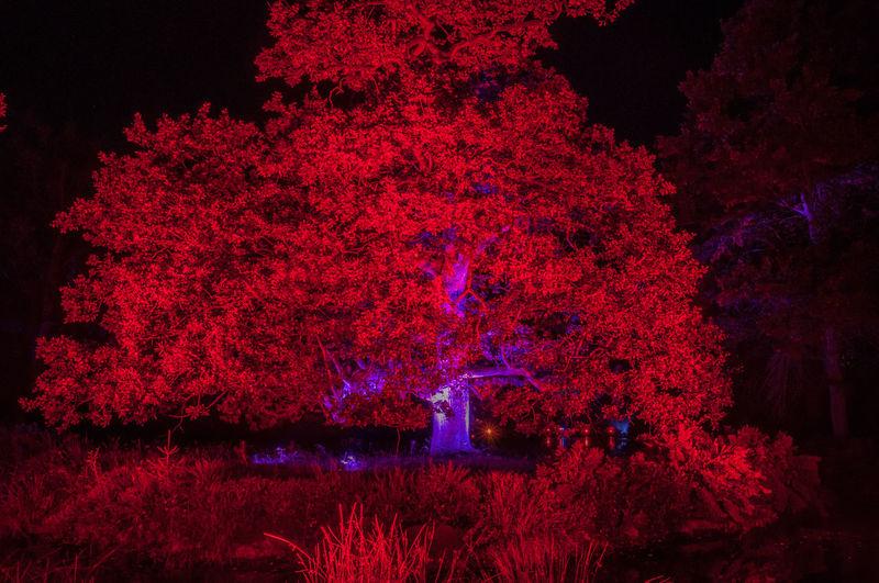 Close-up of illuminated trees against sky at night