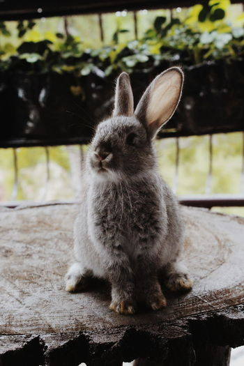 P R E T T Y Petphotography Cute Pets Rabbitlovers Pet Portraits Bunnylovers Cute Rabbit ❤️ Bunny Love Bunny  Plants Pretty Nice Grey Portrait Pets Sitting Close-up Rabbit - Animal Fluffy Rabbit EyeEmNewHere
