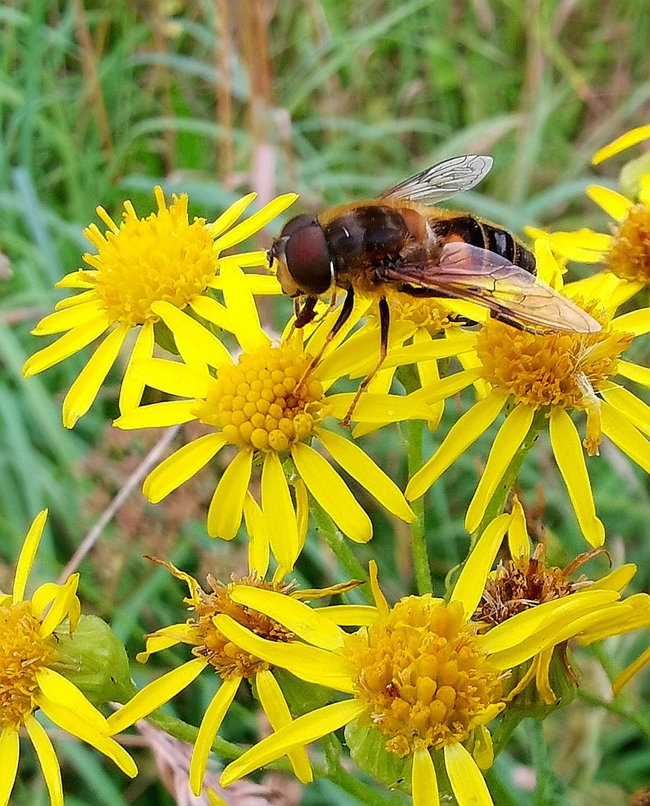 flower, flowering plant, animal themes, animal, animals in the wild, invertebrate, animal wildlife, insect, one animal, fragility, petal, yellow, vulnerability, plant, beauty in nature, growth, flower head, freshness, bee, inflorescence, pollination, no people, pollen, outdoors