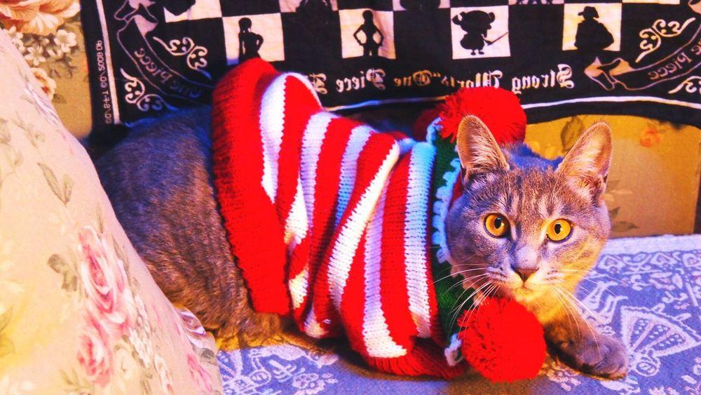 MerryChristmas Cat 20151225