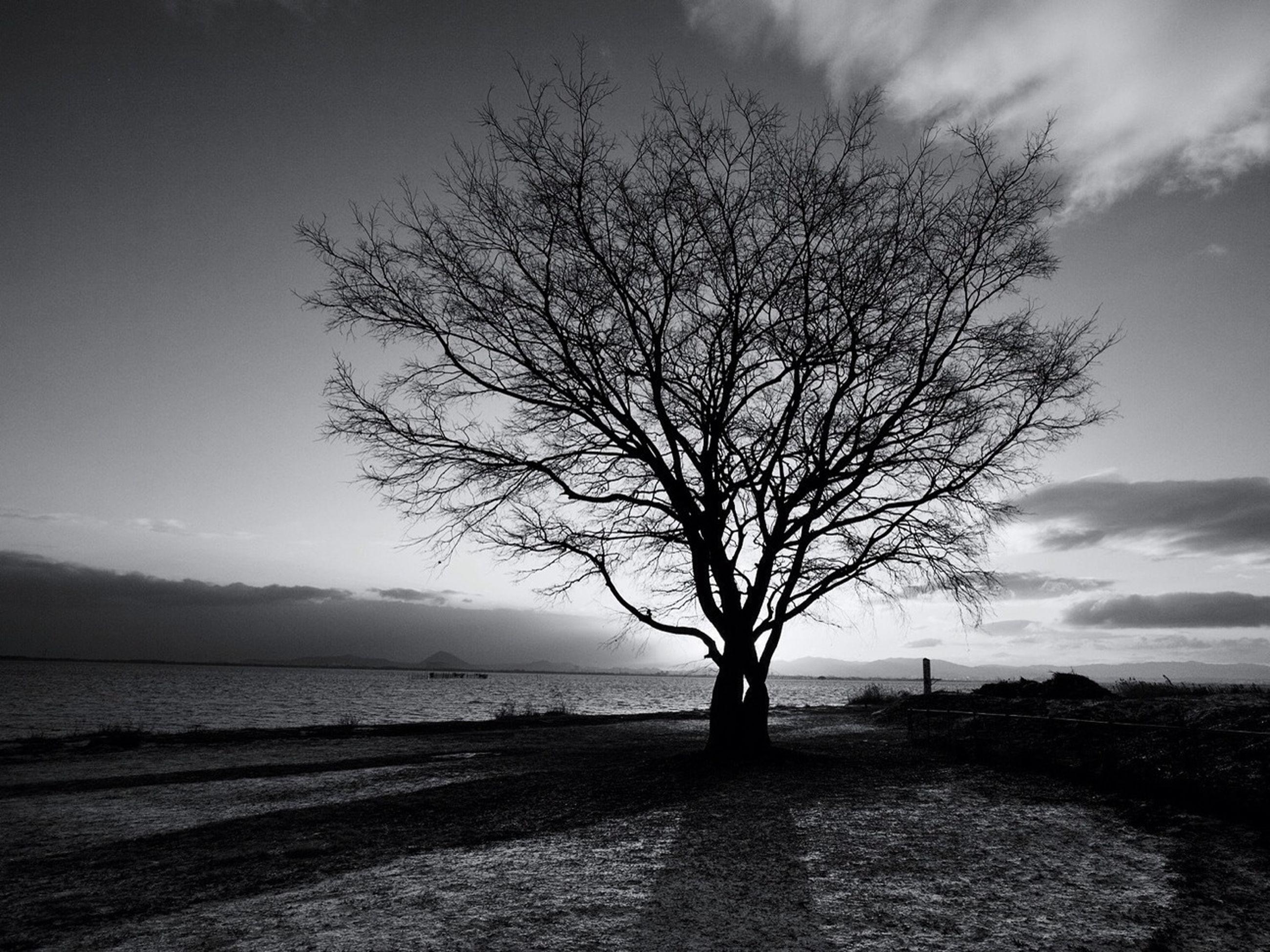 sky, tree, tranquility, tranquil scene, scenics, bare tree, beauty in nature, branch, nature, water, cloud - sky, landscape, sea, cloud, tree trunk, single tree, silhouette, idyllic, horizon over water, non-urban scene