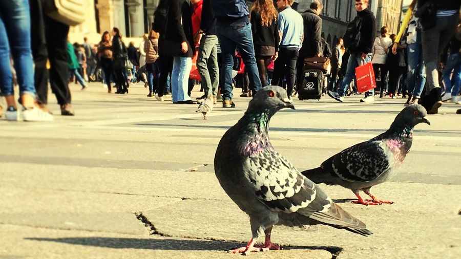 Scherzosamente Bird Duomo Milan Animal Photography FUNNY ANIMALS Animals Bird Photography EyeEm Birds Birds🐦⛅