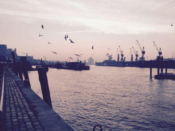 Goodmorning Hamburg Habour Hamburg Harbour Sunset