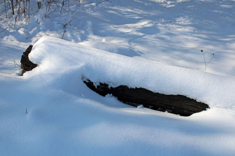 High angle view of horse on snow covered land
