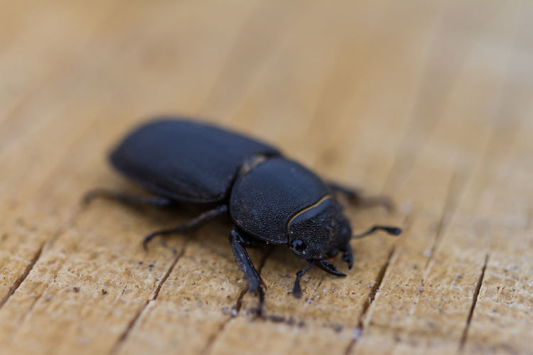 High angle view of beetle on wood