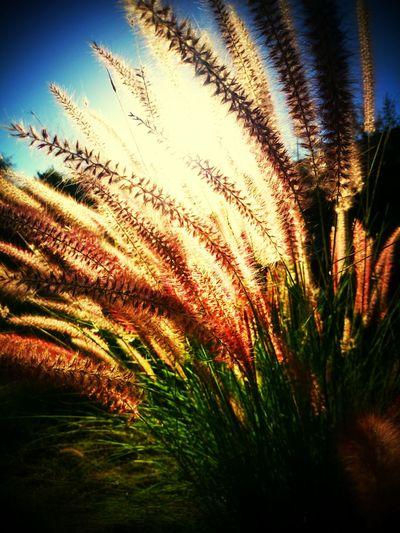 Taking Photos Nature Plants Flowers