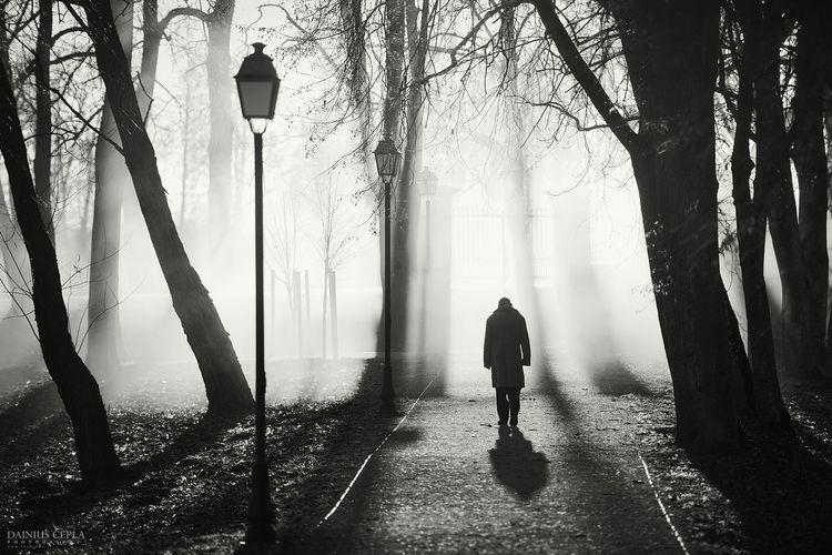 Rear view of man walking through fog in park
