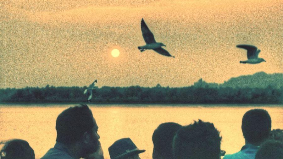 EyeEm Birds Sunshine ☀ Sun Dazzling Ray Nature Light Albatross Evening Sky Evening Sun Sunset Sunsetsky Birds People Watching Birds In Flight Simple Beautiful Nature Beautiful Sunset
