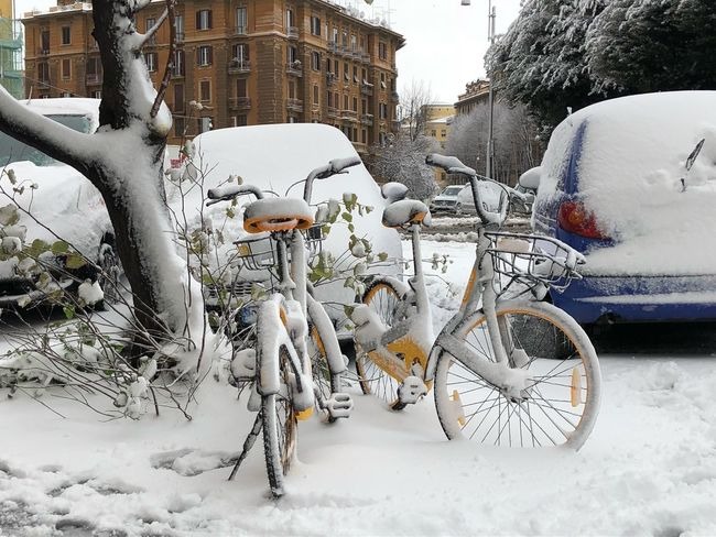 Snow time Snow Winter Cold Temperature Weather Land Vehicle Mode Of Transport Transportation Bicycle White Color Day Nature Tree Street