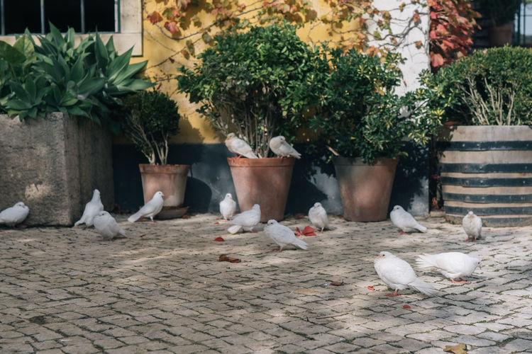 Dove Animal