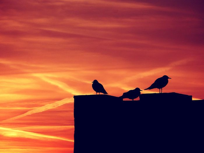 Augenblick Animal Wildlife Sunset Silhouette Animals In The Wild Bird Animal Outdoors No People Nature Animal Themes Sunlight Low Angle View Perching Day Sky Bird Of Prey Be. Ready. Perspectives On Nature Visual Creativity