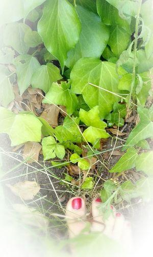 Dejando huellas invisibles Hojas Hiedra Ivy Ivy Leaves Pie Feet Huellas Naturaleza Nature Verde Sueño Dream Sueño De Una Noche De Verano Leaf Close-up Green Color Plant