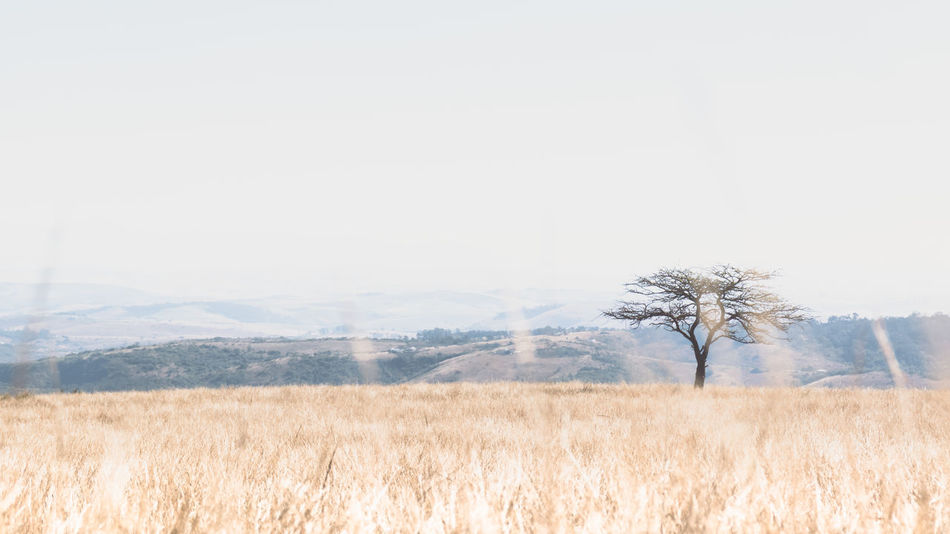 African Beauty In Nature Day Field Grass Growth Idyllic Landscape Mountain Nature No People Non-urban Scene Outdoors Plant Remote Rural Scene Scenic Scenics Sky Tranquil Scene Tranquility Tree Tree Veld