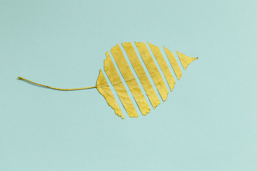 Autumn colors Blue Blue Background Close-up Colored Background Copy Space Cut Out Food Food And Drink Freshness Healthy Eating Indoors  Leaf Nature No People Purity Simplicity Single Object Sky Snack Still Life Studio Shot Yellow