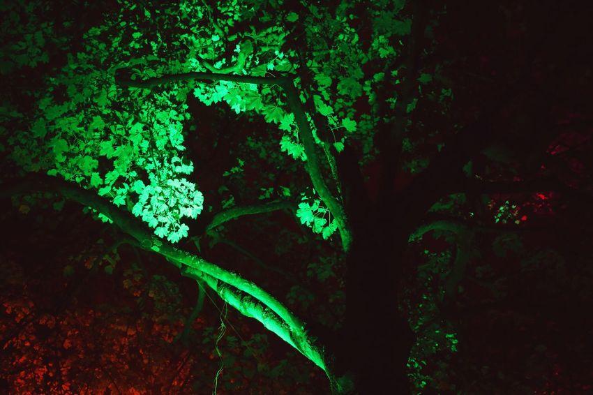 Light Festival Kennedy Park Aachen Hugging A Tree Creative Light And Shadow Colourful Lightinthedark