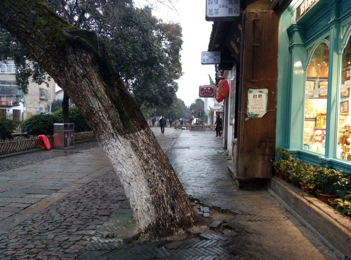 China Suzhou, China Suzhou Suzhou China SUZHOU PINGJIANG ST Suzhou Street Tree Architecture Building Exterior Wet Outdoors City Day No People Built Structure Rain Rainy Days