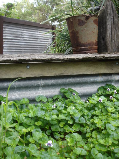 Beauty In Nature Bucket Clover Corrugated Iron Day Garden Green Color Growth Leaf Nature No People Outdoors Plant Plant Rusty Metal