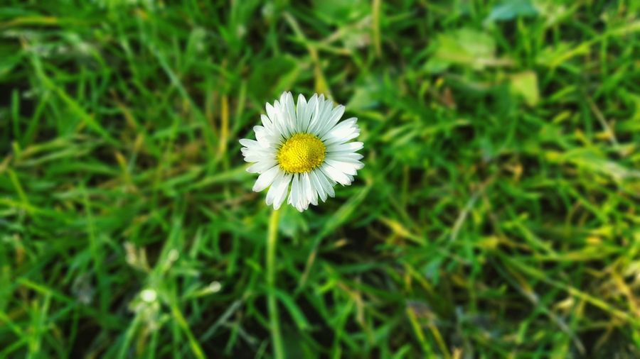Hi! Daisy Daisy Flower Daisyporn Nederland Bloemen Flowers Flowerporn Flower Collection Flower Photography EyeEm Gallery EyeEm Flower Fragility Green Green Nature Nature_collection Landscape Landscape_Collection Nature Photography EyeEm Nature Lover Eyem Gallery Spring Has Arrived Green Grass Greenery Plants
