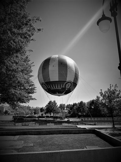 """Here is a (Black and White) Photo shot of Disneyland Resort Paris Balloon Ride """"PanoraMagique"""" 2017. Black & White Black & White Photography Black And White Black And White Collection  Black And White Photography Black&white Blackandwhite Blackandwhite Photography Blackandwhitephotography Clear Sky Day Disneyland Paris Disneyland Resort Paris DLRP France Low Angle View Nature No People Outdoors Rides And Attractions Rides And Sky Sky Tourist Attraction  Tourist Destination Travel And Tourism Tree"""