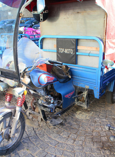 Motorcycle Opportunity Transport Cat Cat On A Seat Day Funny Cat Funny Picture Land Vehicle Moto No People Outdoors Sleeping Cat Sleeping On Seat Stationary Transportation Summer Road Tripping