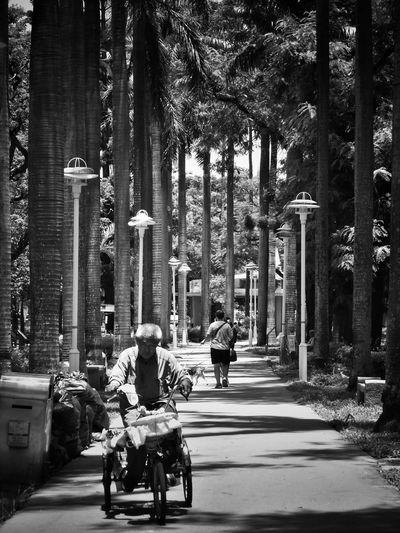 2017/6/26 街拍獵影~林間大道 於臺南公園 Park Bike Biker Taiwan Bw Bw_lover BW_photography B&w Photo B&w Bw Photography B&w Photography Bwphotography Streetphotography Street Street Photography Streetphoto_bw Street Scene Streetphotography_bw b&w street photography Tree Full Length Men Road EyeEmNewHere