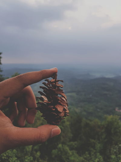Close-up of hand holding pine cone against sky