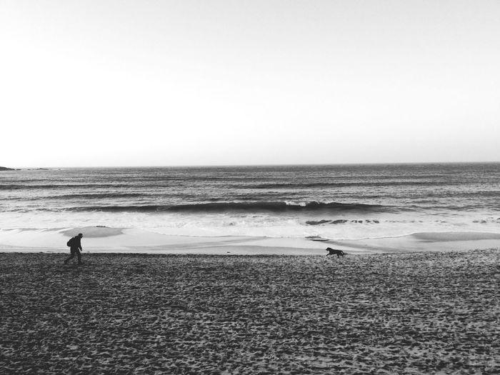 The KIOMI Collection England Cornwall Seaside Sea And Dog Blackandwhite