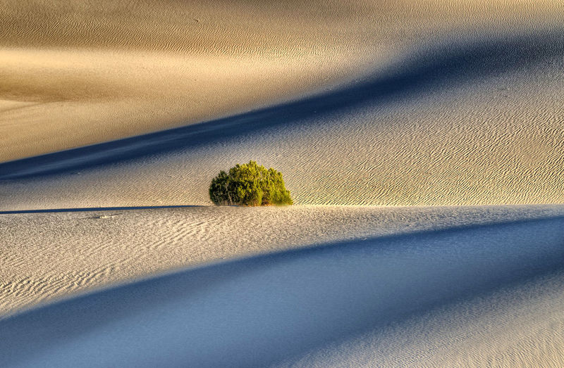 Plant growing at death valley desert