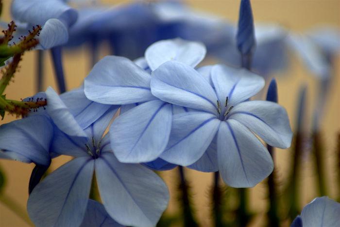 macro flower Flowers Flowers,Plants & Garden Macro Macro Beauty Macro Photography Macro_collection Macro_flower Macroclique Nikon Nikon60d Nikonphotography