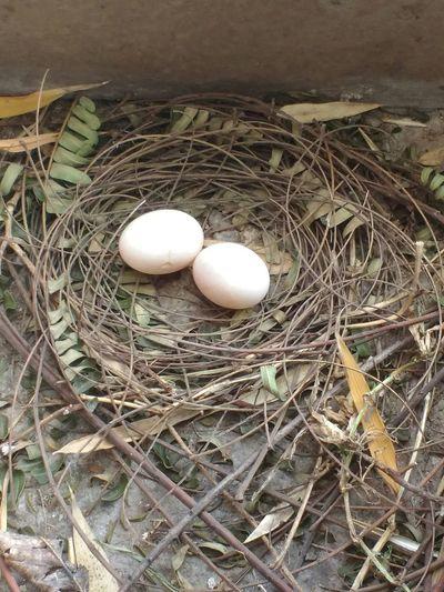 Egg Animal Egg