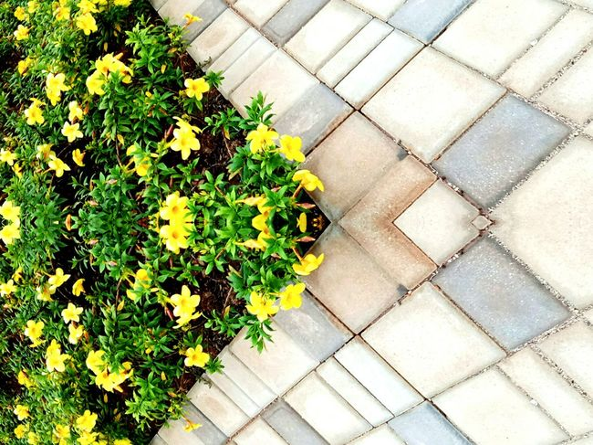 Plant Growth High Angle View Outdoors Day Nature Flower No People Sidewalk Yellow Beauty In Nature Close-up Place Of Heart
