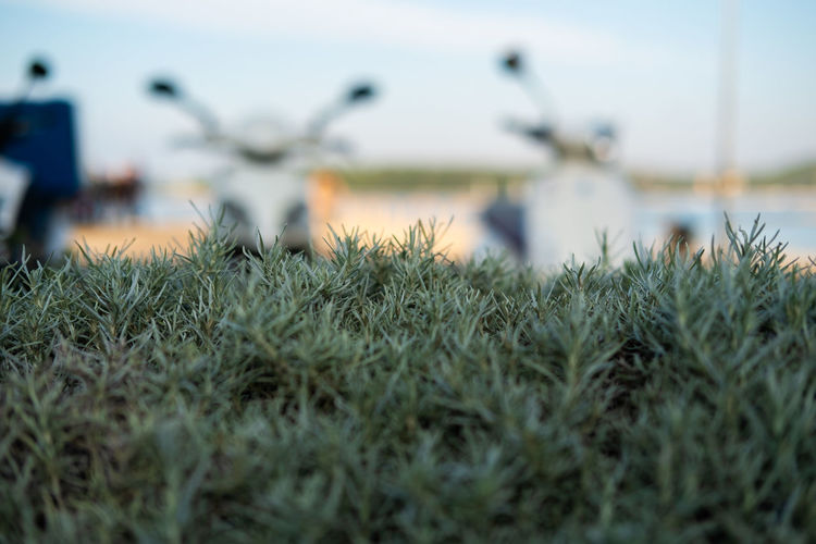 Rosemary herb on seaside Plant Growth Selective Focus Nature Grass Day Land Sky No People Beauty In Nature Outdoors Green Color Tranquility Close-up Water Nautical Vessel Tranquil Scene Field Focus On Foreground Rosemary Herb Leisure Activity