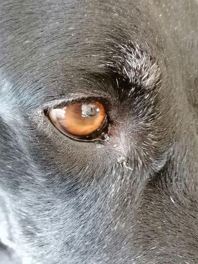 Dog Eye Dog