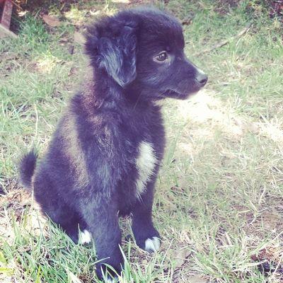 Lala Dog Meticcio Canemeticcio Puppy