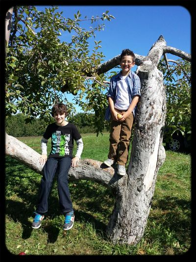 Apple picking with the boys!!!
