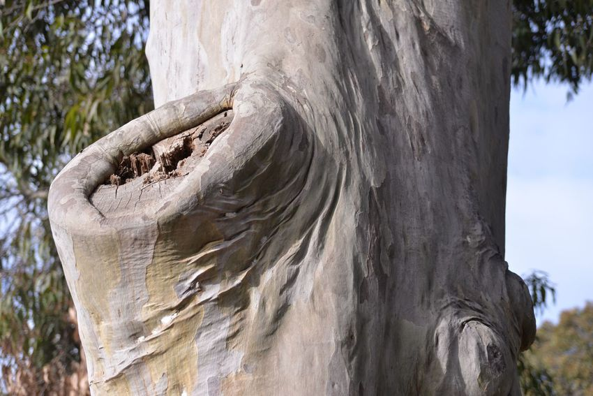Tree Trunk Nature Tree Wood - Material Day No People Textured  Outdoors Tree Stump Close-up Growth Sky