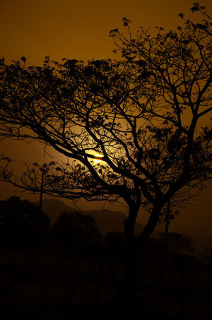Sunset Beauty In Nature Branch Landscape Nature No People Romantic Sky Silhouette Sky Sunset Tranquil Scene EyeEmNewHere