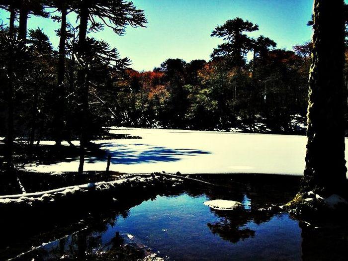 Parque Nacional Huerquehue Chile Naturaleza Nature