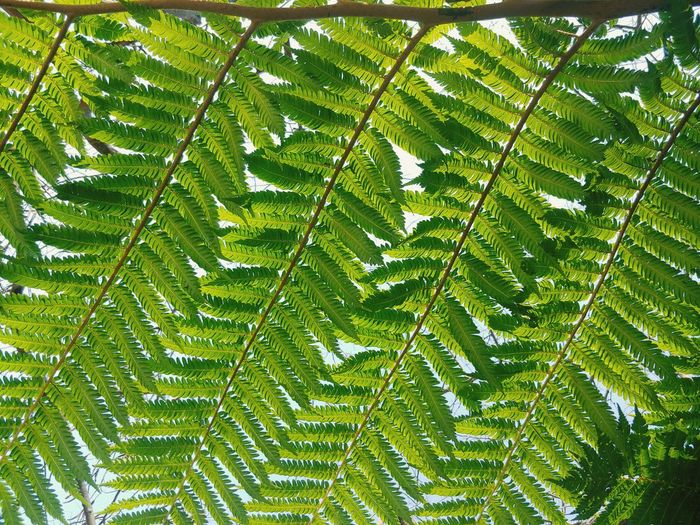 Fern detail Leaf Forest Full Frame Green Close-up Plant Green Color Leaves Botanical Foliage Fern Photosynthesis Leaf Vein Delicate Spring Vegetation Garden Lush Shaped