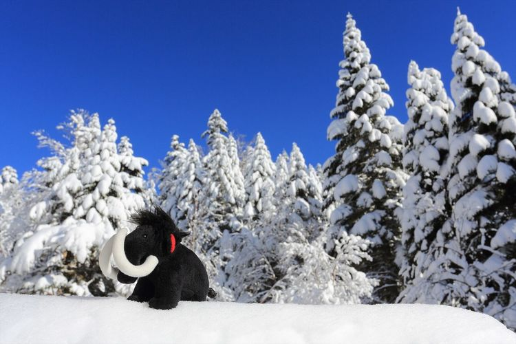 Mammoth is over there lol Blue Cold Temperature Enjoying Life Japan Landscape Landscape_Collection Mammut Mountain Nature Outdoors Snow White Winter Wonderful