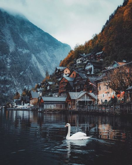 Hallstatt Moodygrams Stayandwander Wanderlust Water Architecture Nature Tree Animal Bird Lake Built Structure Animal Themes Animals In The Wild Building Exterior Mountain Animal Wildlife Beauty In Nature Sky Waterfront No People Outdoors Vertebrate